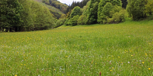 Feuchtwiesen im Liesetal bei Hallenberg-Liesen