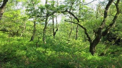 Niederwald bei Meschede-Visbeck