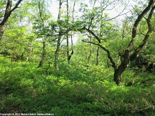 Niederwälder bei Visbeck - Naturerlebnisweg westlich von Meschede