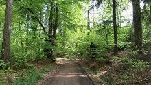 Moosfelde – Forest Nature Reserve north-east of Arnsberg near Neheim