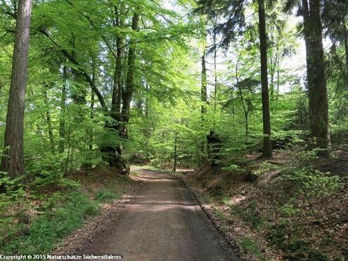 Moosfelde - Naturerlebnisweg nordöstlich von Arnsberg bei Neheim