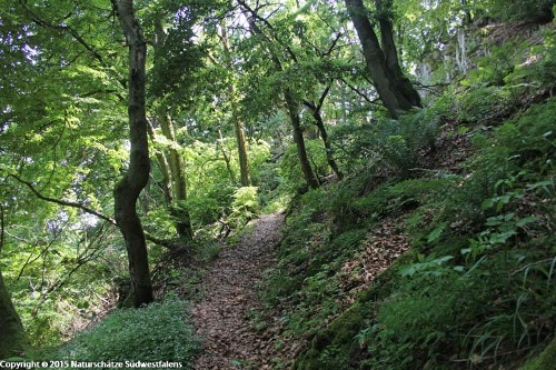 Weiße Frau - Naturerlebnisweg entlang von Berghängen und Magergrünländern rund um Brilon-Rösenbeck