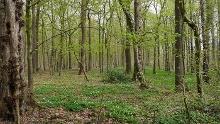Wälder um Welver - natural deciduous forest near Welver