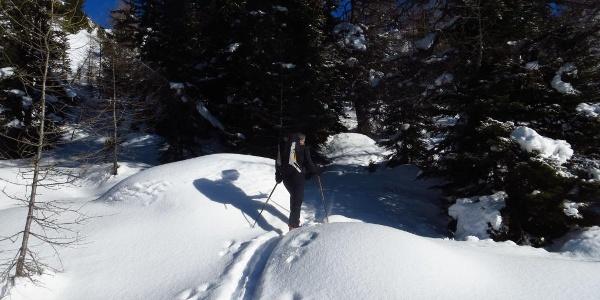 Knapp unterhalb der Waldgrenze wird es etwas flacher