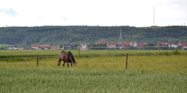 Blick nach Höpfingen entlang des ehemaligen Rollfeldes