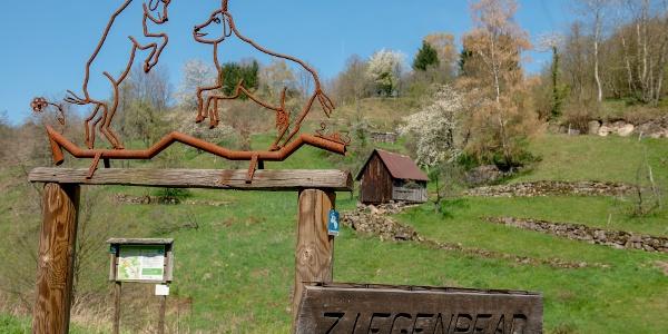 Ziegenpfad in Forbach Bermersbach