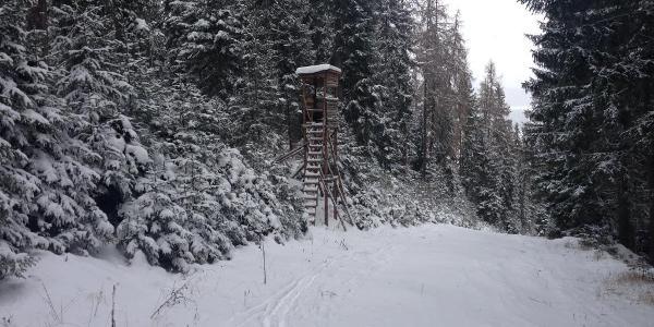Neuschnee im Wald