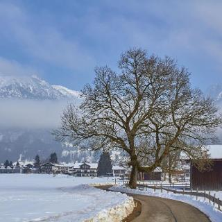 Baum bei Oberstdorf.