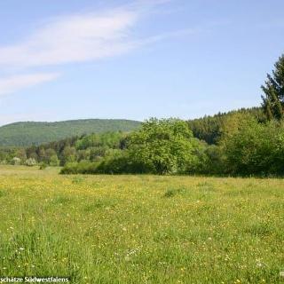 Blühende Feuchtweiden im Gelängebachtal