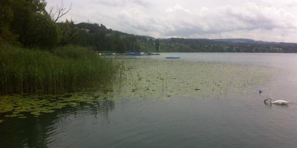 Le lac de Hallwil