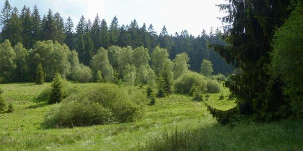 Blick auf das Elberndorf-Zwischenmoor