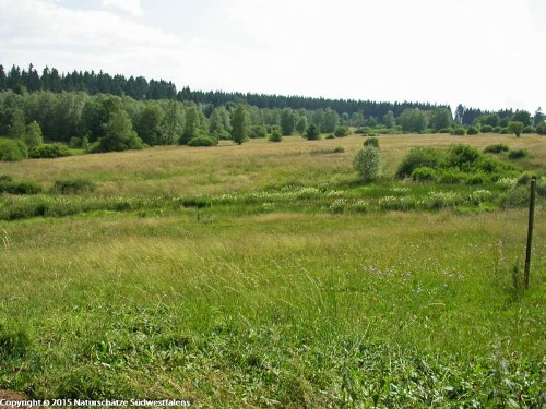 Blick über die Ginsberger Heide