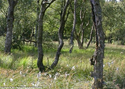 Oberes Edertal - Naturerlebnisweg nordöstlich von Netphen