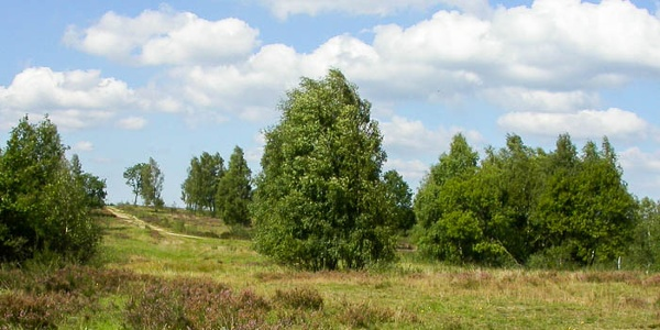 Trupbacher Heide