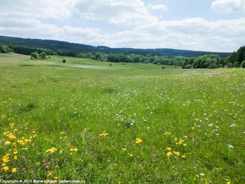 Gernsdorfer Weidekämpe - Wiesen und Weiden östlich von Wilnsdorf-Gernsdorf