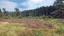 Gambach und Hirtenwiese - Wacholderheide südlich Burbach