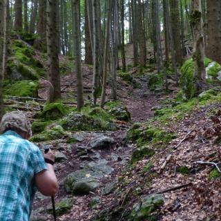 Steiler Pfad durch den Wald