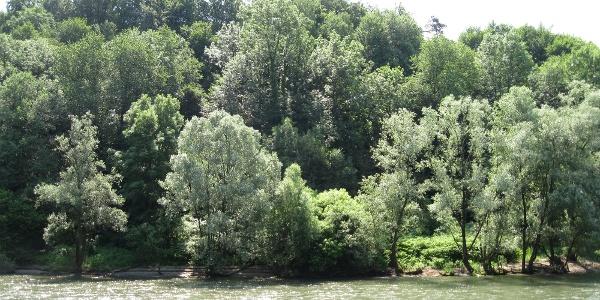 Sicht zum Auwald auf der slowenischen Seite
