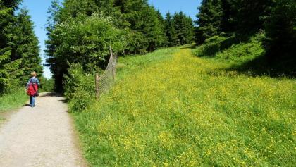 Breite Wege ohne große Steigungen