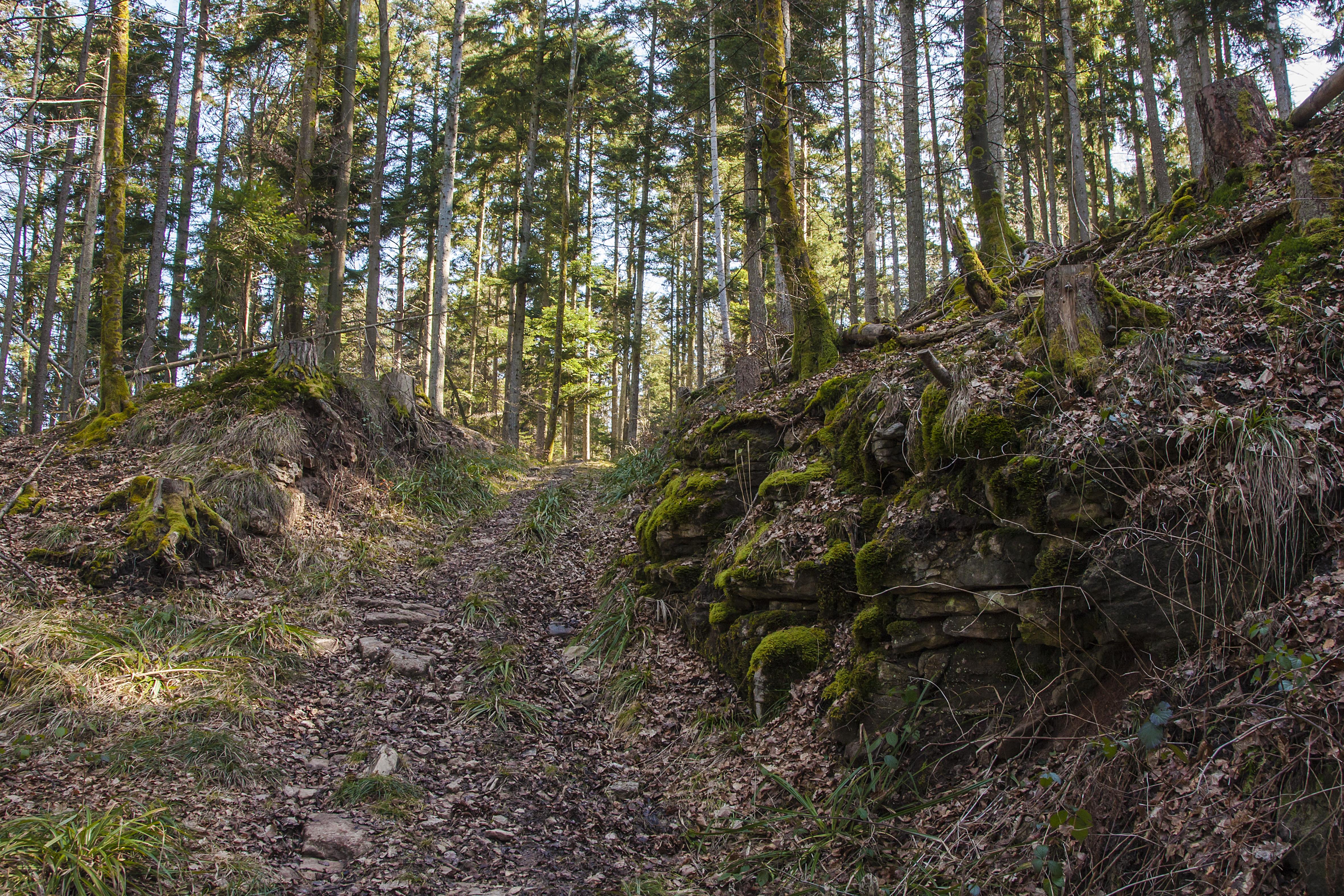 Mildersbachtalrundweg
