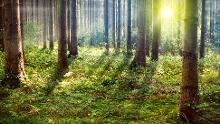 Den Jerischker Wald bei einer Wanderung entdecken