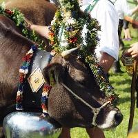 Der Viehscheid – eine alte Tradition