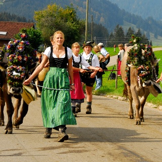 Cattle drive in Ofterschwang Gunzesried