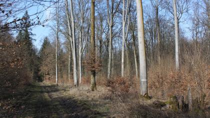 Guttenbergerwald