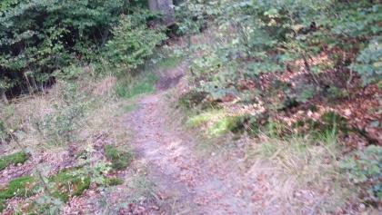 Trail Camp Willingen im Sauerland | Ridefirst – Fahrtechnikkurse NRW ...