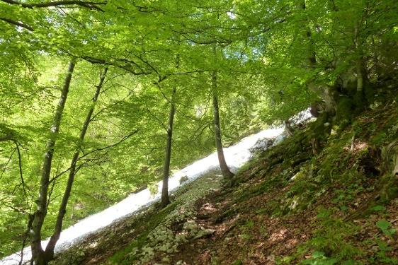 Ammergauer Höhenweg (1.Etappe von 4)