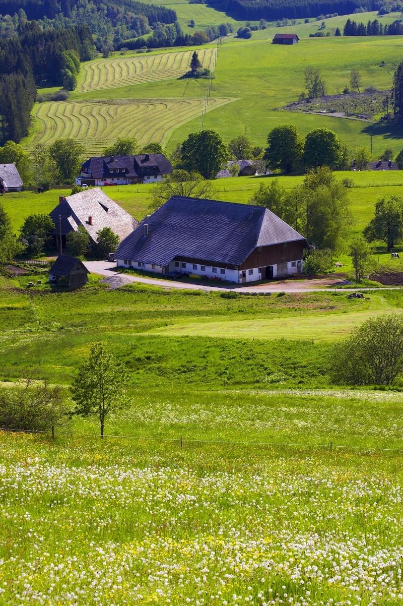 Höhenklimaweg Lenzkirch Gschind-Rundweg