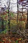 Weg Kappelberg im Herbst  - @ Autor: Helmut Klingler  - © Quelle: Helmut Klingler