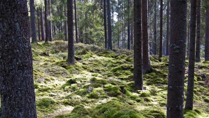 Naturschutzgebiet in Schweden