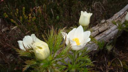 Frühlingsblumen am Weg