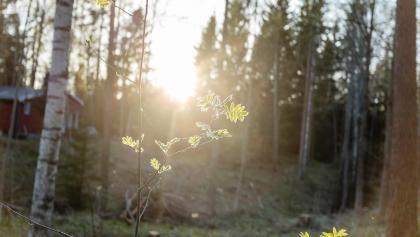 Wald in Südschweden