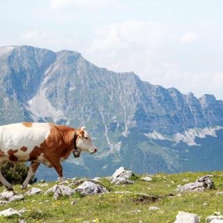 Gemeindealpe Mitterbach - Blick auf den Ötscher