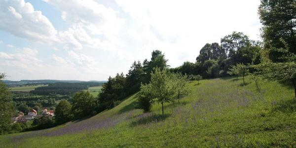Oberndorfer Hänge in Bad Abbach, Ortsteil Oberndorf