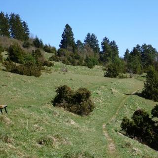 Naturschutzgebiet Mühlhausener Halde