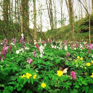 Besonders schön im Frühling (hier Mitte April)