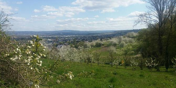 Blick über das Rheintal Richtung WW und Köppel