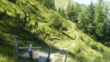 Bevor man auf der Forststraße absteigt, führt dieser idyllische Steig durch den lichten Bergwald.