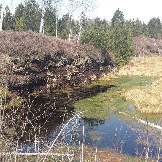 Das Hochmoor mit Torfstichstelle im Hintergrund