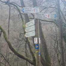 Schilderwald im Binger Wald