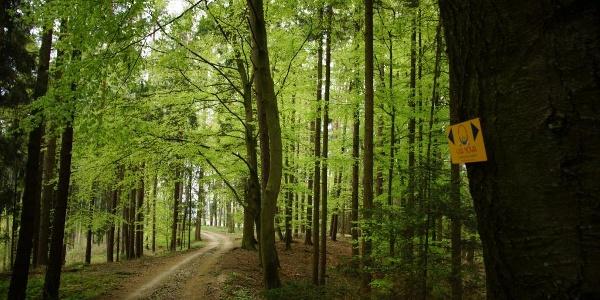 Pilgerweg durch schattige Waldabschnitte