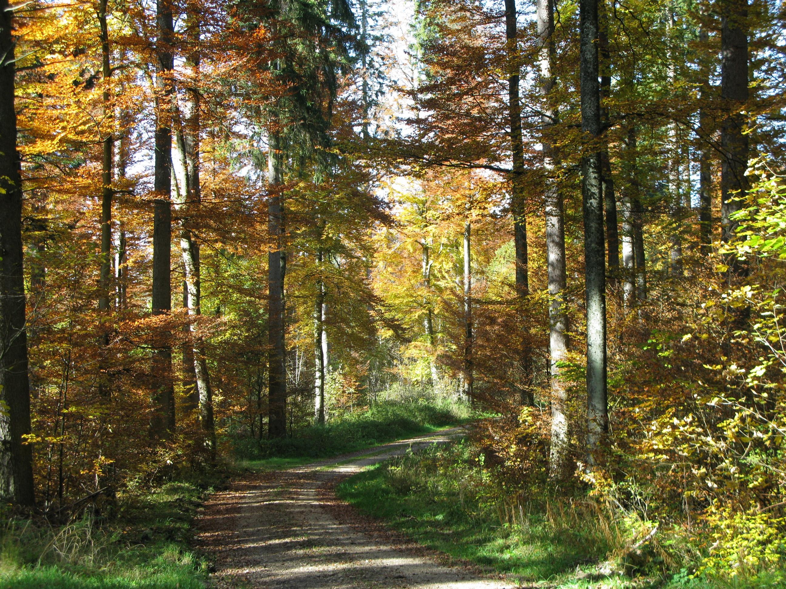 Waldpassage im Rammelloch