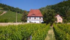 Das östlichste Weinbaugebiet Deutschlands