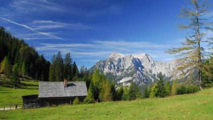 Auf der Hochscheibenalm(1.189 m) zweigt man von der Forststraße auf den Steig zur Ennser Hütte ab