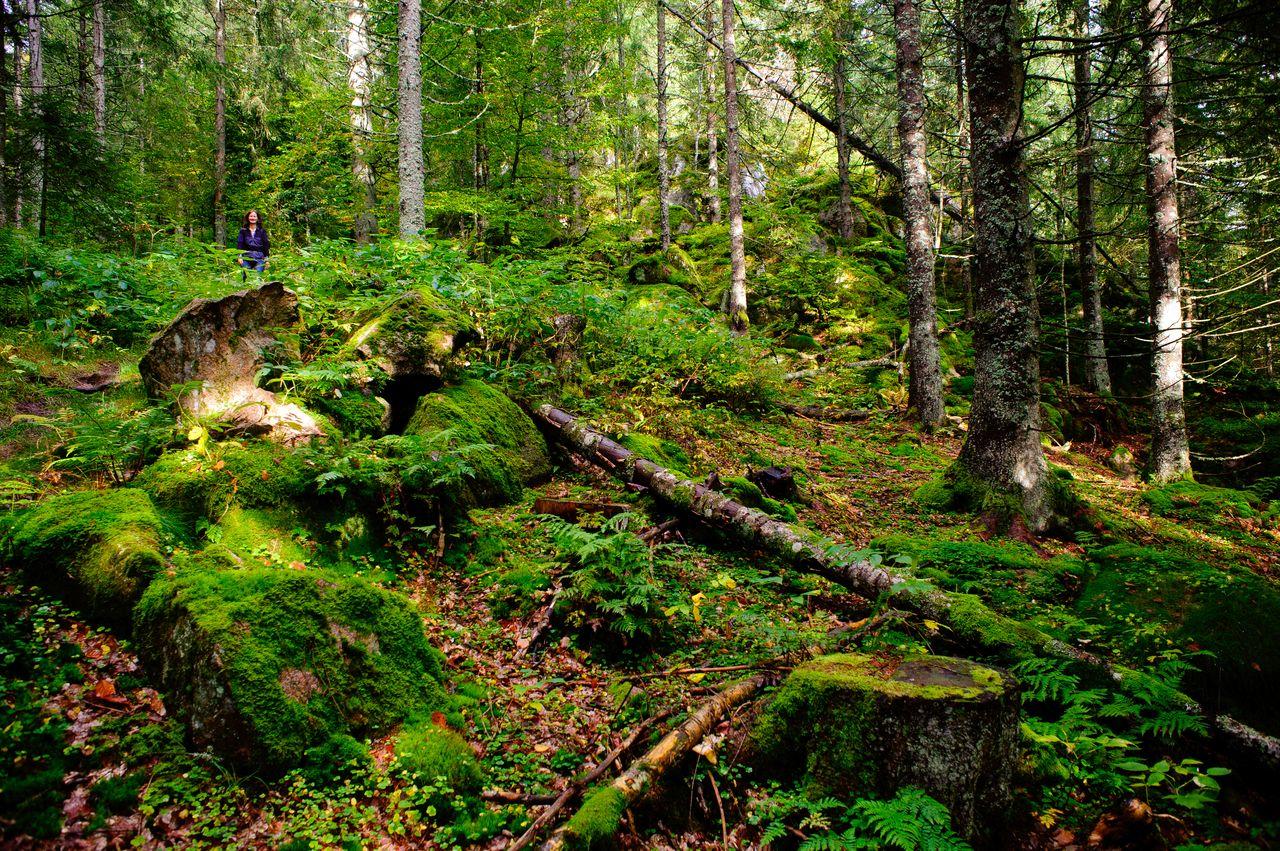 Durch märchenhafte Wälder geht es auf dem Hochtal Steig in Bernau. Foto: Birgit-Cathrin Duval