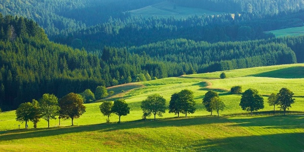 Blick vom Panoramaweg in Bernau auf die Wiesenlandschaften des Hochtals