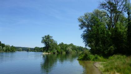 Thur-Mündung